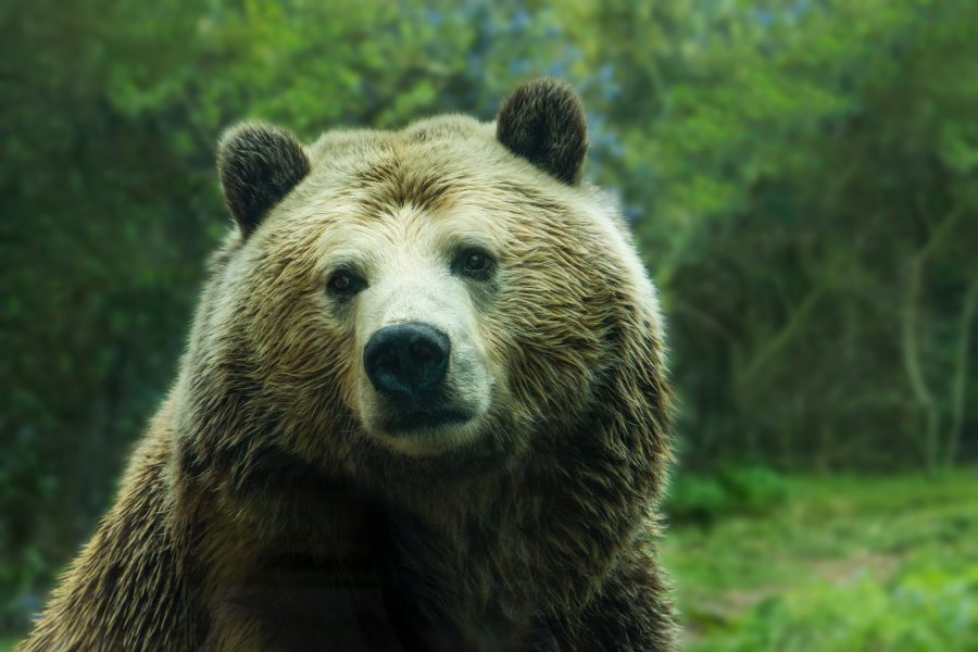A bear's eye for beauty – The HammockPapers
